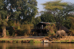 Elefant im Chiawa Camp in Sambia | Abendsonne Afrika