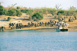 Bootsfahrt bei der Chobe Game Lodge in Botswana | Abendsonne Afrika
