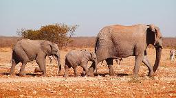 Elefantenfamilie im Etosha Nationalpark, Namibia | Abendsonne Afrika