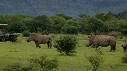 Nashörner im Marakele National Park in Südafrika | Abendsonne Afrika