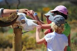 Aktivitäten für Kinder in der Gondwana Lodge in Südafrika | Abendsonne Afrika