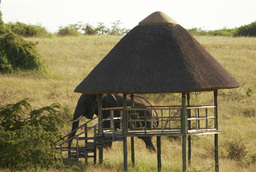 Tierbeobachtung des Kasenyi Camp in Uganda | Abendsonne Afrika
