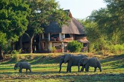 Elefanten vor dem Luangwa Safari House in Sambia | Abendsonne Afrika