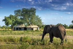 Elefant im Nyamatusi Mahogany Camp in Simbabwe | Abendsonne Afrika