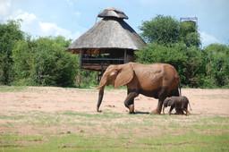 Elefant mit Jungem beim Rhino Safari Camp in Simbabwe | Abendsonne Afrika
