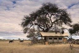 Elefanten nahe eines Zeltes des Somalisa Expeditions in Simbabwe | Abendsonne Afrika