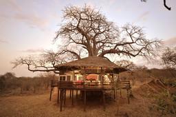 Baumhaus der Tarangire Treetops Lodge in Tansania | Abendsonne Afrika